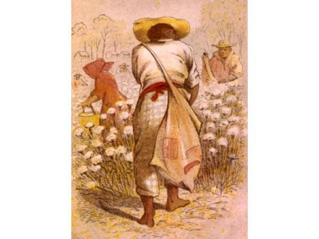 Free Book - Cotton Slave