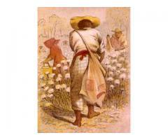 Cotton Slave