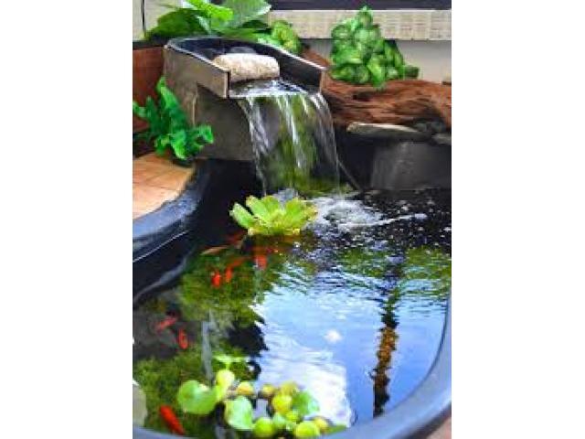 Free Book - Garden Pond